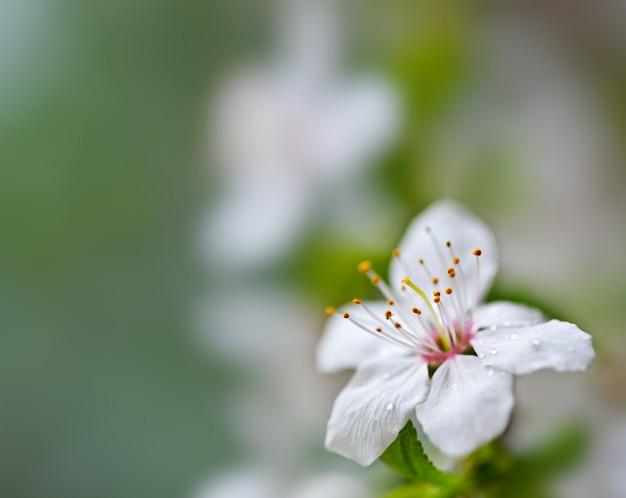 Floral suave