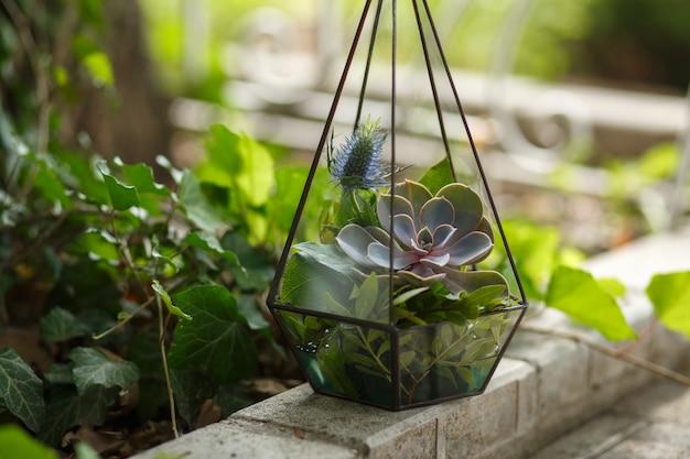 Florarium com flores suculentas frescas