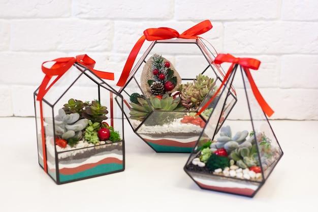 Florarium, composição de suculentas, pedra, areia e vidro, elemento do interior, decoração da casa, natal,