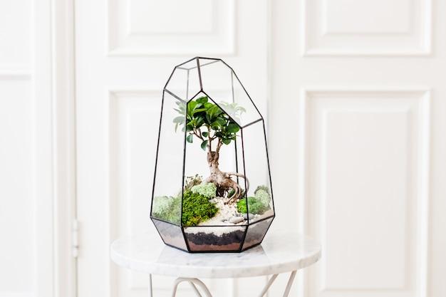 Florarium - composição de suculentas, pedra, areia e vidro, elemento do interior, decoração, terarium de vidro