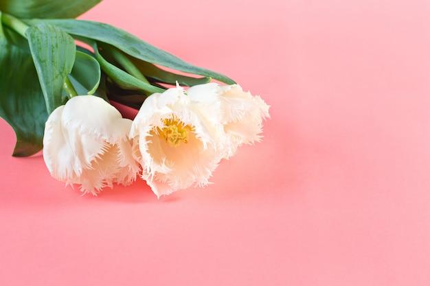Flores, 8 de março. dia da mulher. parabens primavera. flores da primavera. tulipas