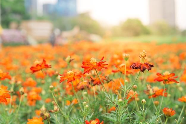 Flores alaranjadas com prado verde no jardim brilhante