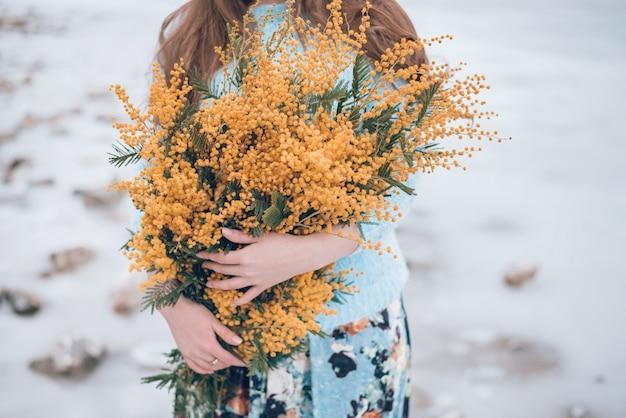 Flores amarelas da mimosa nas mãos da mulher, colhidas.