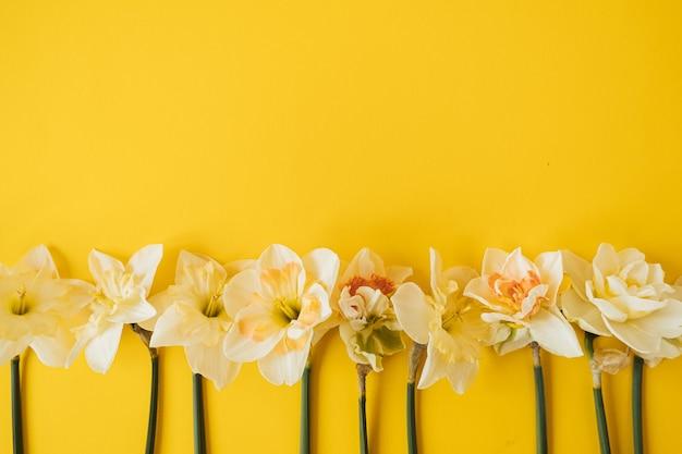 Flores amarelas de narciso em amarelo