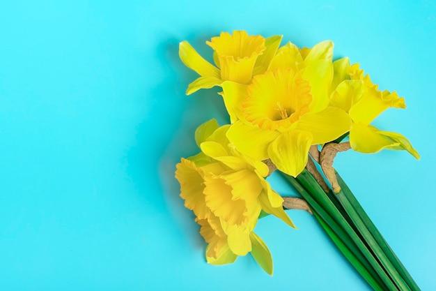 Flores amarelas de narcisos em um fundo azul