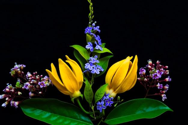 Flores amarelas de ylang ylang em preto