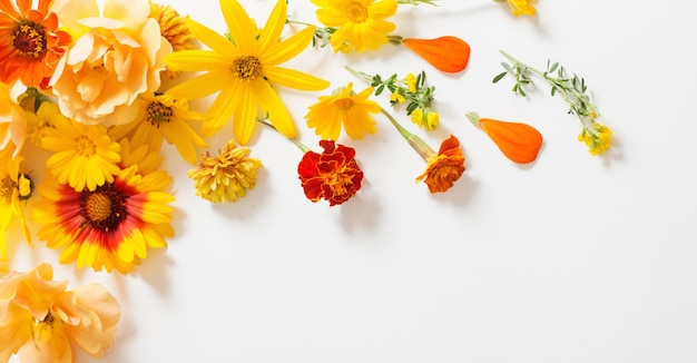 Flores amarelas e laranja em fundo branco