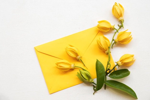 Flores amarelas em envelope amarelo