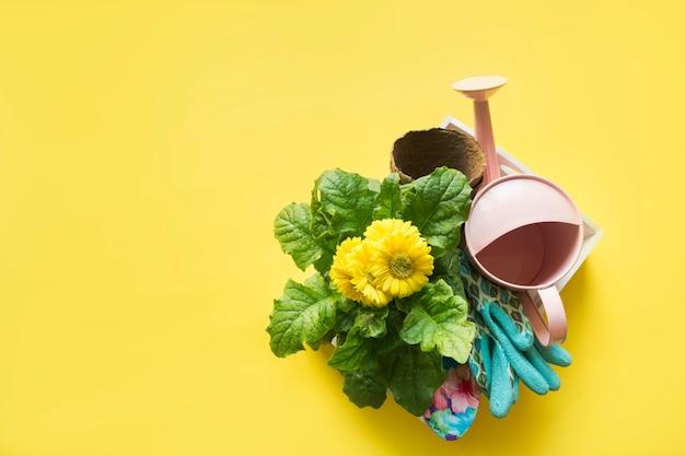 Flores amarelas em panela, regador e ferramentas. primavera e jardinagem. passatempo. horticultura.