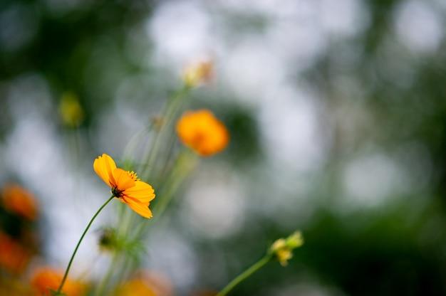 Flores amarelas em um belo jardim de flores