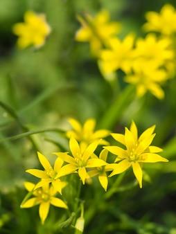 Flores amarelas em um fundo natural verde, foco suave.