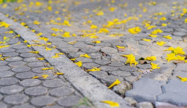 Flores amarelas no chão