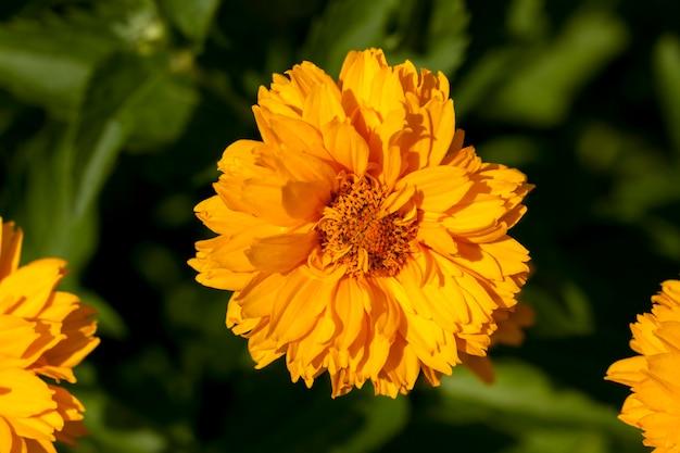 Flores amarelo-laranja no verão