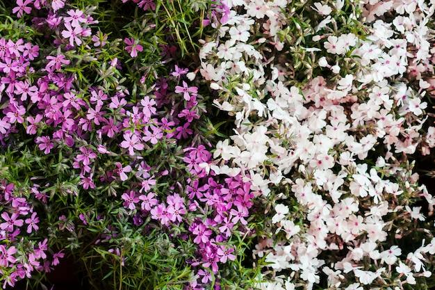 Flores ao ar livre
