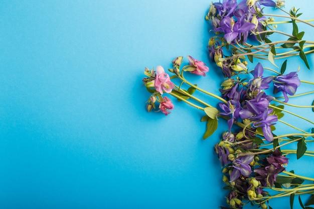 Flores aquilégias cor-de-rosa e roxas no azul pastel.