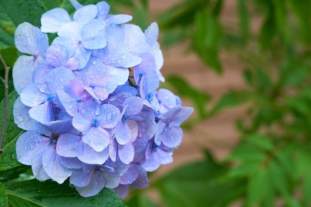 Flores azuis com folhas verdes