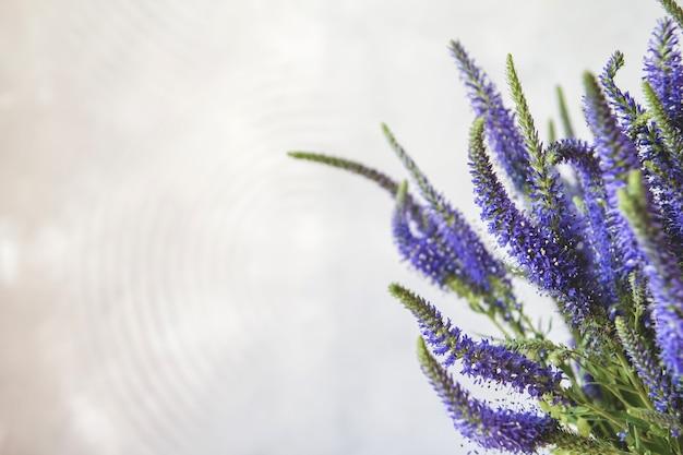 Flores azuis de veronica.
