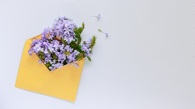 Flores azuis em envelope amarelo em azul claro