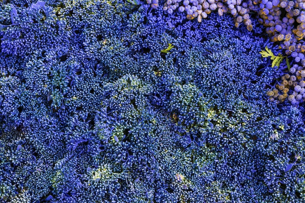 Flores azuis.