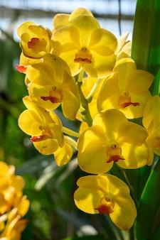 Flores bonitas da orquídea em tailândia.