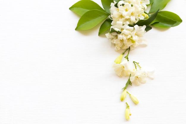 Flores brancas arranjo de jasmim plano plano estilo cartão-postal