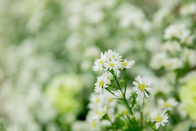Flores brancas com fundo bokeh
