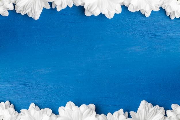 Flores brancas, crisântemos em um fundo azul.