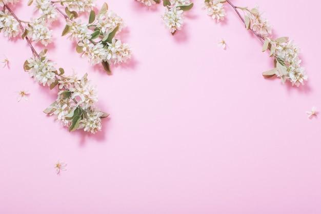 Flores brancas da primavera em uma superfície de papel rosa