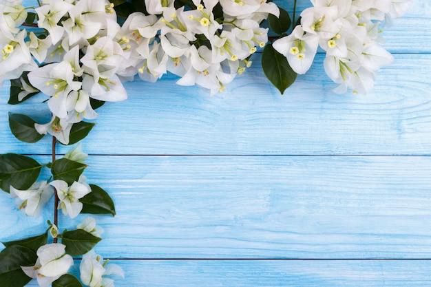 Flores brancas de buganvílias