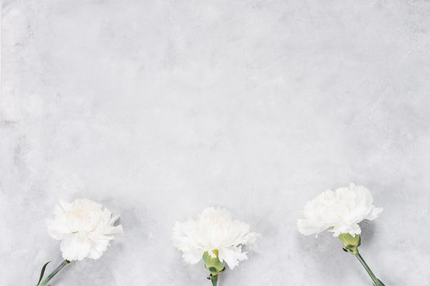 Flores brancas de cravo na mesa cinza