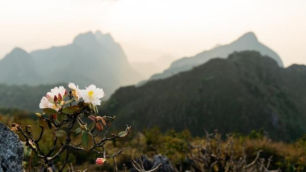 Flores brancas desabrochando em primeiro plano da paisagem das montanhas