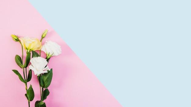 Flores brancas e amarelas em fundo duplo-de-rosa e azul