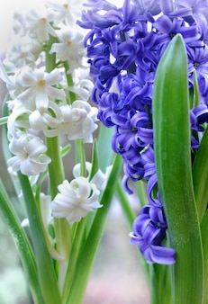Flores brancas e azuis