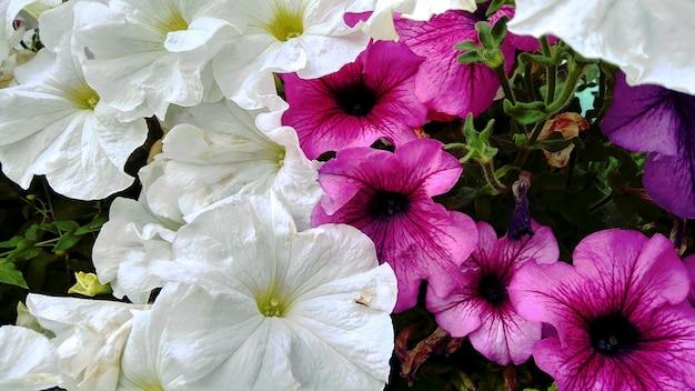 Flores brancas e lilases no jardim