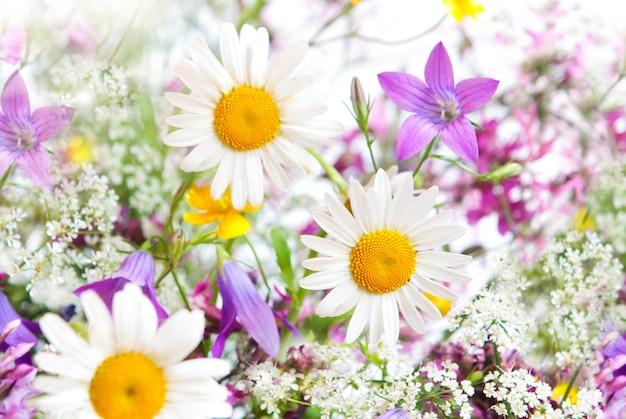 Flores brancas e roxas em fundo branco