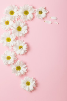 Flores brancas em fundo rosa claro
