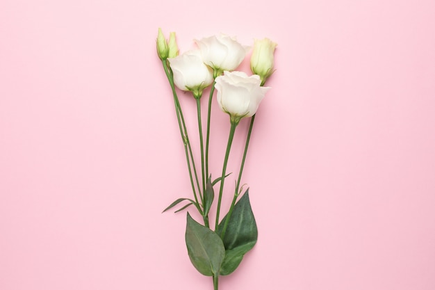 Flores brancas em rosa
