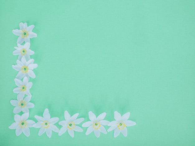 Flores brancas. lay plana. conceito de natureza verão.