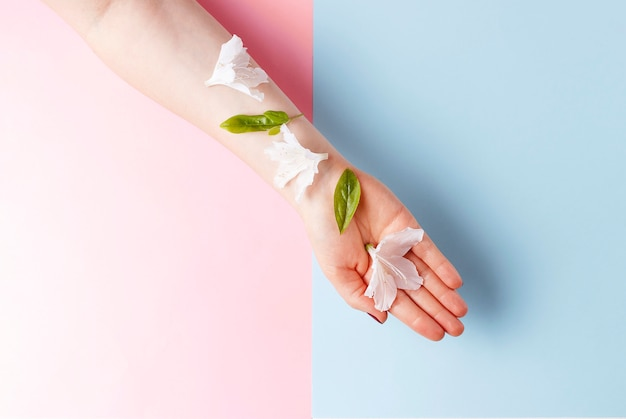 Flores brancas na mão feminina, rosa e azul de fundo, copie o espaço