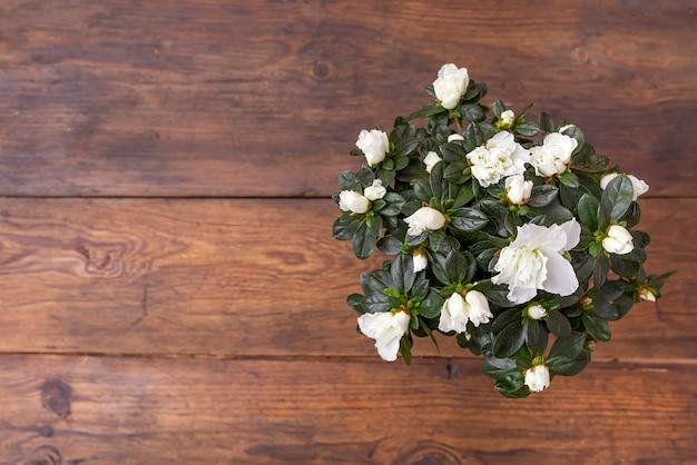 Flores brancas na mesa de madeira marrom com espaço de cópia