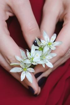 Flores brancas nas mãos de mulher.