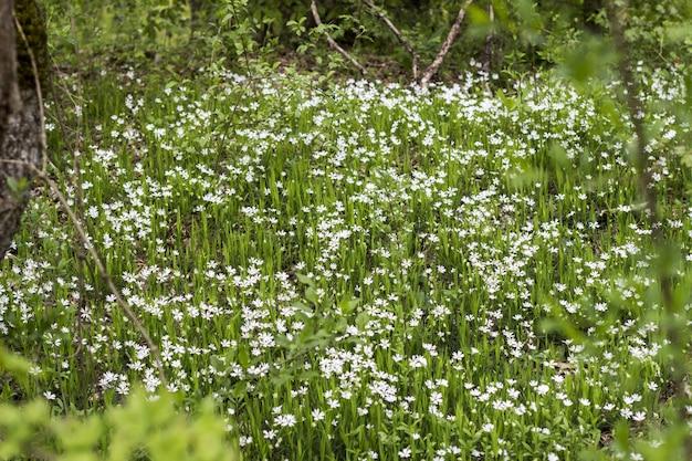 Flores brancas no campo