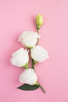 Flores brancas no fundo rosa. localização vertical.