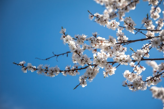Flores brancas nos ramos no fundo do céu