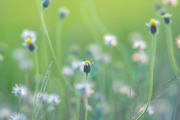 Flores brancas pequenas em um fundo borrado heterogêneo. fundo de natureza de verão.