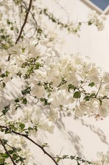 Flores brancas plantam ramos e sombra de luz solar em parede bege neutra