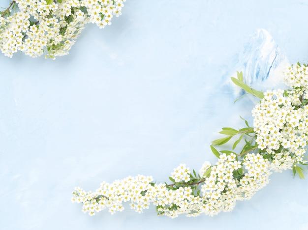 Flores brancas sobre fundo azul concreto. pano de fundo com espaço para texto