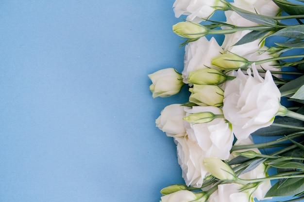 Flores brancas sobre fundo azul. parabéns