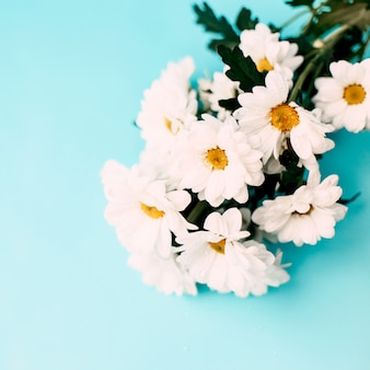 Flores brancas sobre fundo azul