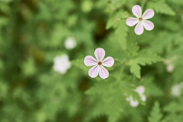 Flores brancas umas sobre as outras atrás de um fundo verde